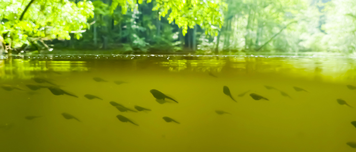 Tadpoles in a pond